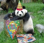 birthdaypanda